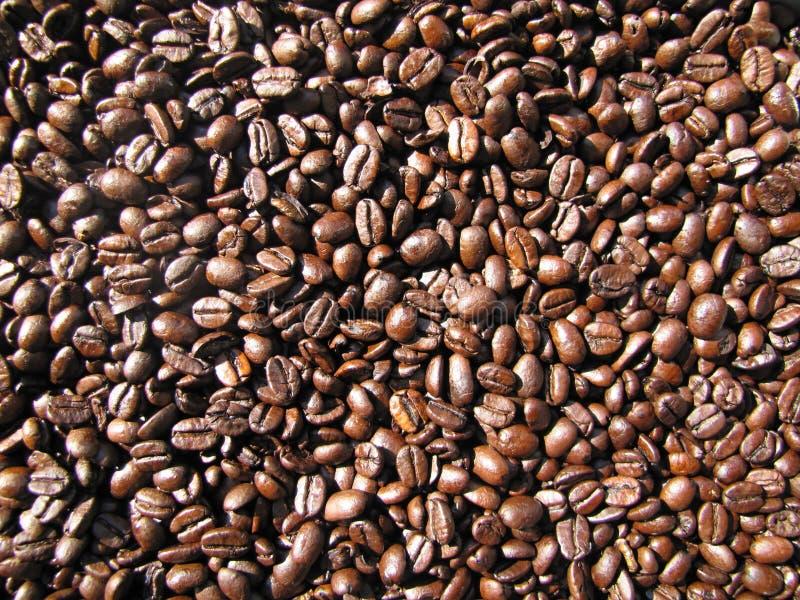 Ψημένα φασόλια καφέ ως υπόβαθρο καφέ στενός καφές φασολιών επάν στοκ εικόνα με δικαίωμα ελεύθερης χρήσης