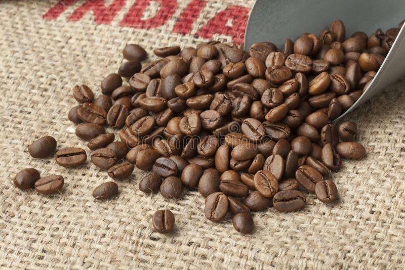 Ψημένα φασόλια καφέ Malabar στοκ εικόνες