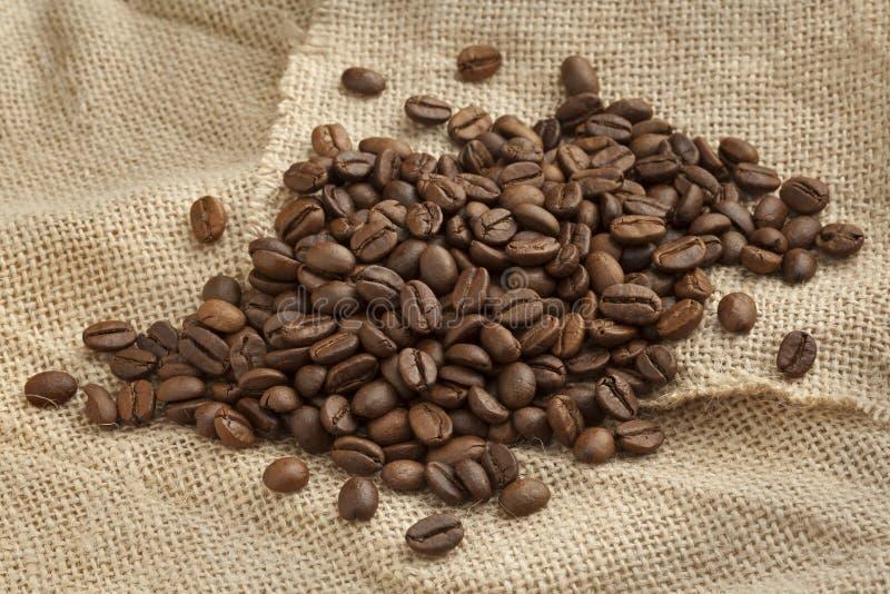 Ψημένα φασόλια καφέ Malabar στοκ φωτογραφία με δικαίωμα ελεύθερης χρήσης