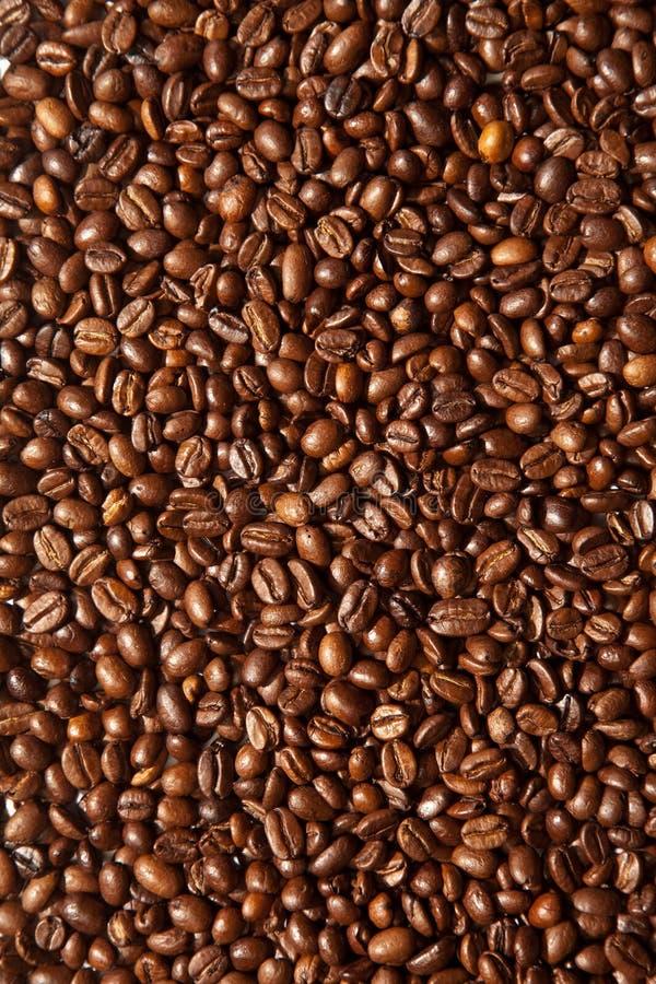 ψημένοι καφές σπόροι στοκ εικόνα με δικαίωμα ελεύθερης χρήσης