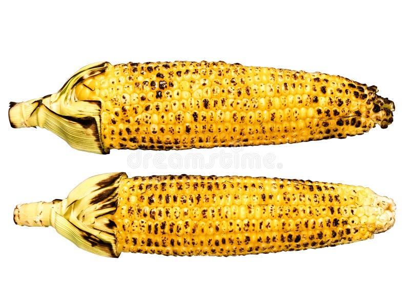 Ψημένος corncob απομονωμένος στοκ φωτογραφία με δικαίωμα ελεύθερης χρήσης