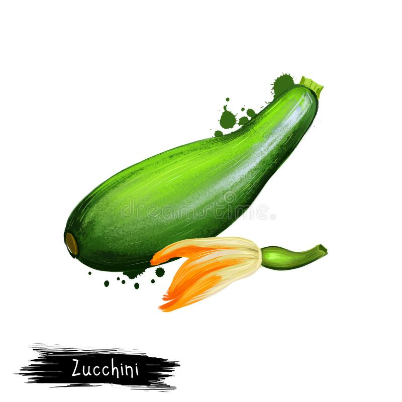 Ψηφιακή απεικόνιση τέχνης των κολοκυθιών, του κολοκυθιού ή του pepo Cucurbita που απομονώνεται στο άσπρο υπόβαθρο r o διανυσματική απεικόνιση