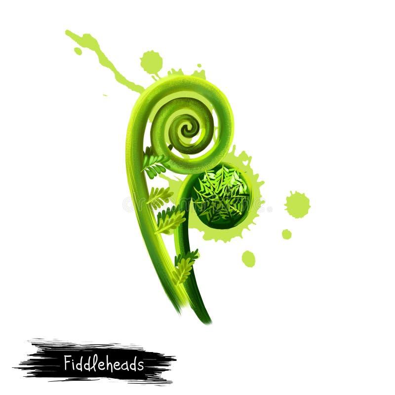 Ψηφιακή τέχνη Fiddleheads, fiddlehead πράσινα, φτέρη Fiddlehead που απομονώνεται στο άσπρο υπόβαθρο r Πράσινο λαχανικό διανυσματική απεικόνιση