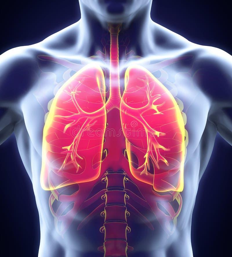 ψηφιακό ανθρώπινο αναπνευστικό σύστημα απεικόνισης διανυσματική απεικόνιση