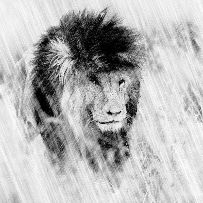 Ψηφιακό σκίτσο ενός ενήλικου αρσενικού λιονταριού απεικόνιση αποθεμάτων