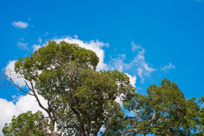 Ψηλά δέντρα και συμπαθητικός ουρανός στοκ εικόνες με δικαίωμα ελεύθερης χρήσης