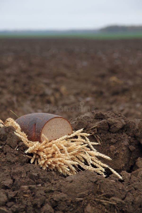 Ψωμί σε ένα χώμα στοκ εικόνες