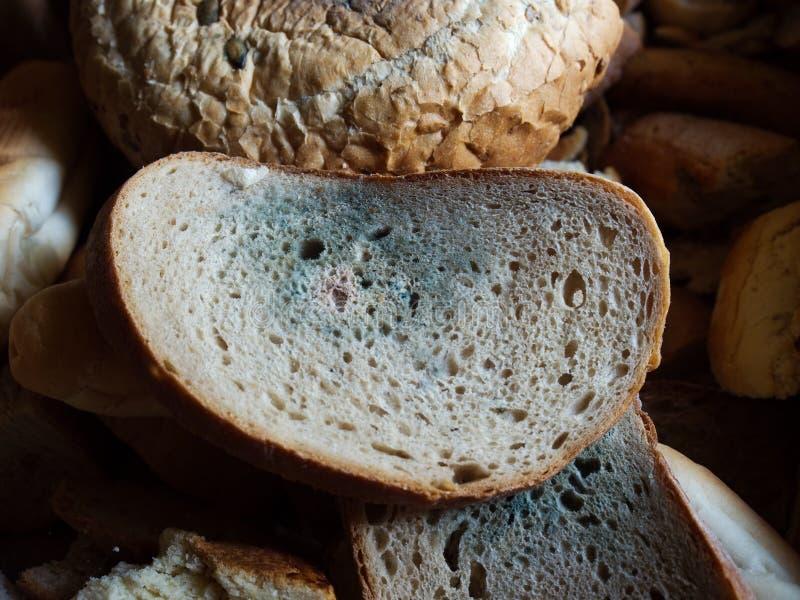 ψωμί moldy στοκ φωτογραφίες
