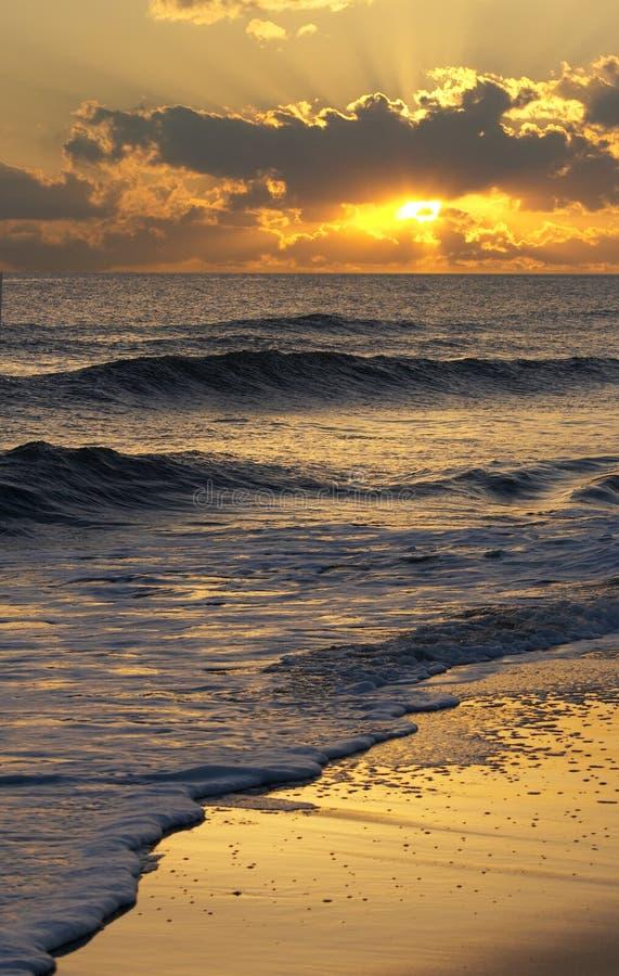 ωκεάνια ακτίνα στοκ εικόνες