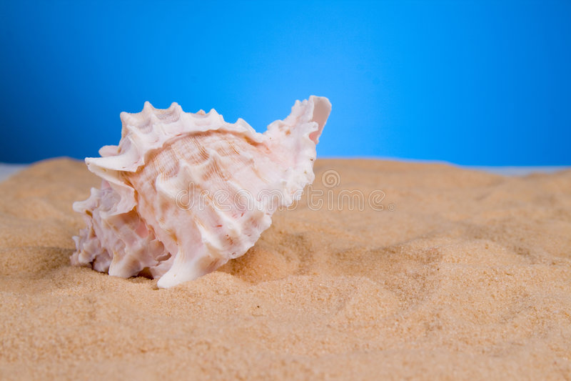 ωκεάνια κοχύλια στοκ εικόνες