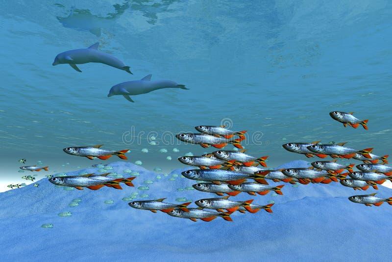 ωκεάνιες άγρια περιοχές ελεύθερη απεικόνιση δικαιώματος