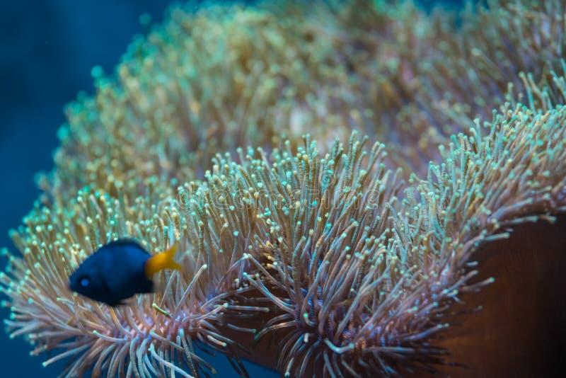 Ωκεάνιος κόσμος, Πράγα στοκ εικόνες με δικαίωμα ελεύθερης χρήσης