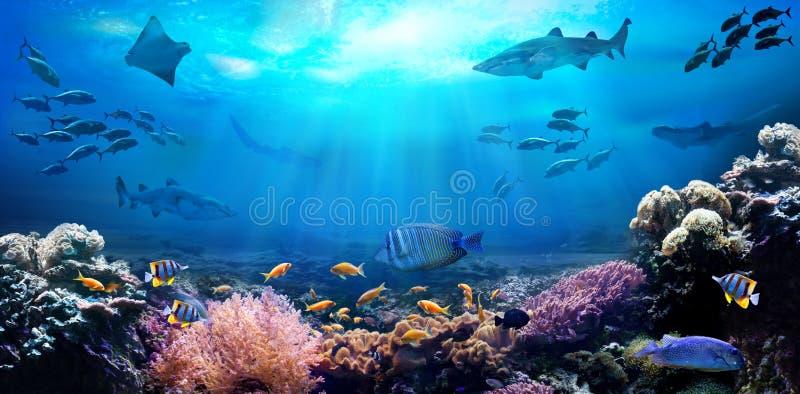 Ωκεάνιος υποβρύχιος με τα θαλάσσια ζώα r απεικόνιση αποθεμάτων