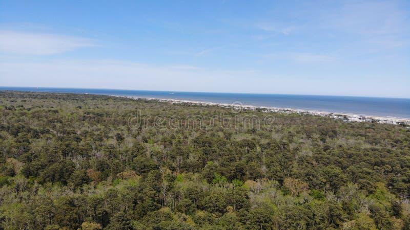 Ωκεάνιο δάσος του Μαϊάμι Φλώριδα θάλασσας στοκ φωτογραφίες με δικαίωμα ελεύθερης χρήσης