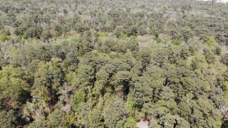Ωκεάνιο δάσος του Μαϊάμι Φλώριδα θάλασσας στοκ φωτογραφία
