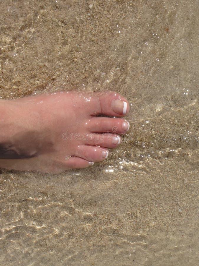 ωκεάνιο να περπατήσει το&u στοκ φωτογραφίες με δικαίωμα ελεύθερης χρήσης