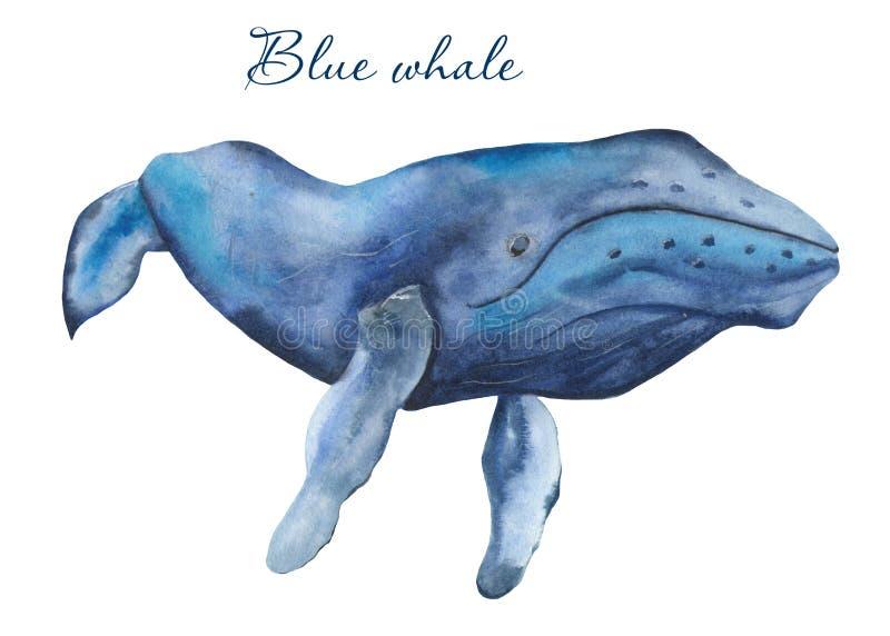 Ωκεάνιο watercolor θηλαστικών απεικόνιση αποθεμάτων