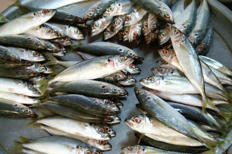 ωκεανός ψαριών στοκ εικόνες με δικαίωμα ελεύθερης χρήσης