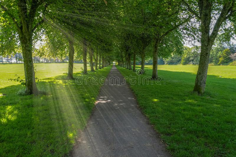 Ωριμάστε τα σκωτσέζικα δέντρα το καλοκαίρι και ένα μονοπάτι που τρέχει μέσω του κέντρου της εικόνας και των σκοτεινών σκιών κάτω  στοκ εικόνες με δικαίωμα ελεύθερης χρήσης