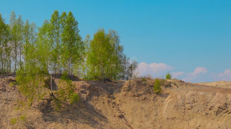 Όαση με πράσινα δέντρα στην αμμώδη έρημο στην άκρη του γκρεμού, σημύδα στοκ φωτογραφία