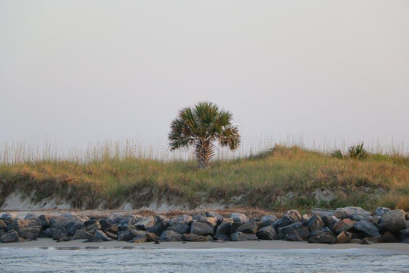 Download όαση στοκ εικόνα. εικόνα από φοίνικας, τροπικός, νησί - 62700905