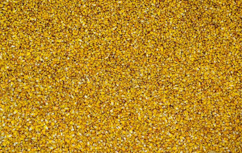 Όγκος της κίτρινης σύστασης σιταριών καλαμποκιού στοκ φωτογραφία