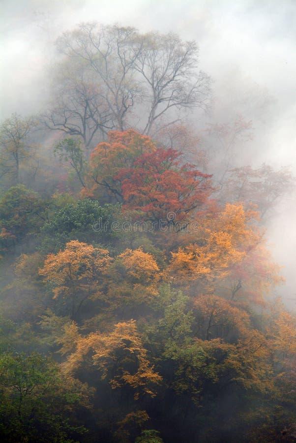 όλα τα φύλλα λόφων πέρα από τ&omicron στοκ εικόνες