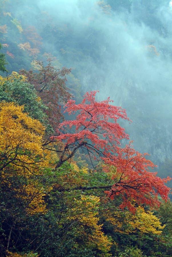 όλα τα φύλλα λόφων πέρα από τ&omicron στοκ φωτογραφίες