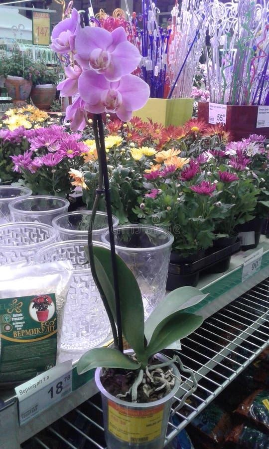 Ορχιδέα λουλουδιών στοκ φωτογραφία