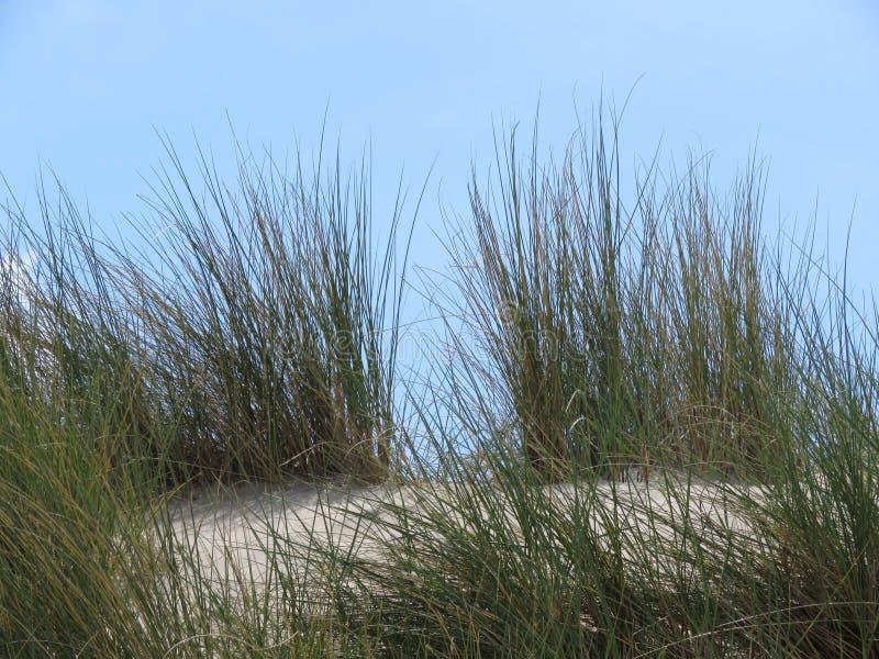 Όλο το είδος κοχυλιών στην παραλία στοκ εικόνα με δικαίωμα ελεύθερης χρήσης