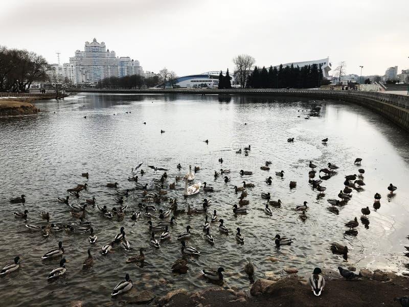 Όμορφα άγρια πουλιά σε μια εικονική παράσταση πόλης στοκ εικόνες με δικαίωμα ελεύθερης χρήσης