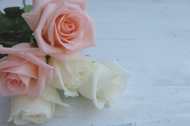 Όμορφα άσπρα και ρόδινος-πορτοκαλιά τριαντάφυλλα στο λευκό ξύλινο πίνακα Valentine& x27 έννοια υποβάθρου ημέρας του s στοκ φωτογραφία με δικαίωμα ελεύθερης χρήσης