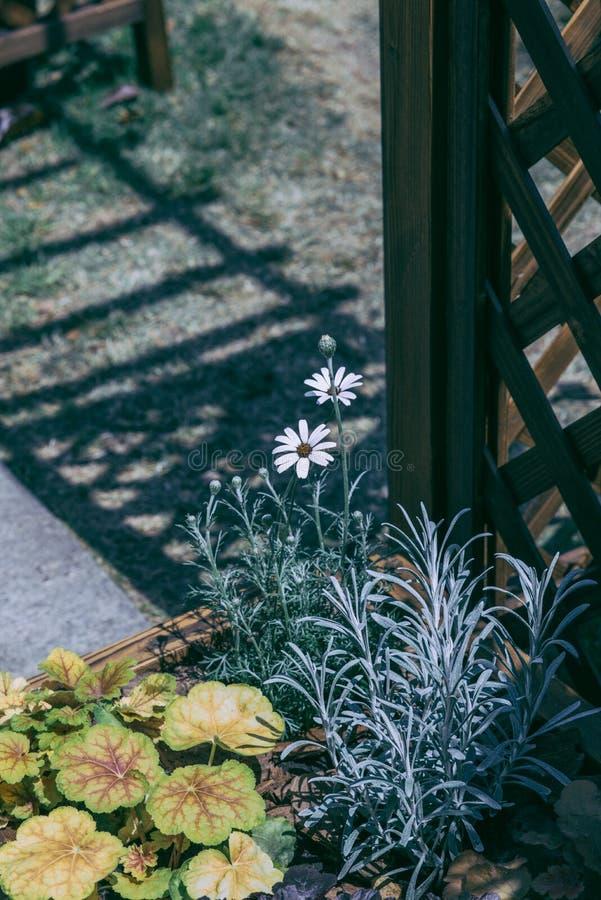 Όμορφα άσπρα λουλούδια κοντά στην πύλη φρακτών διανυσματική απεικόνιση