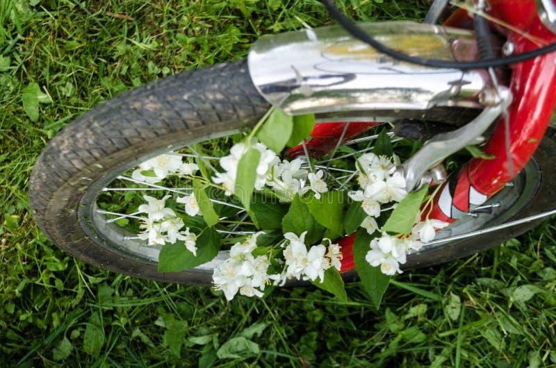 Όμορφα άσπρα λουλούδια jasmine στη ρόδα ενός κόκκινου παλαιού ποδηλάτου στα πλαίσια των πράσινων δέντρων, της κομμένων χλόης και  στοκ φωτογραφία με δικαίωμα ελεύθερης χρήσης
