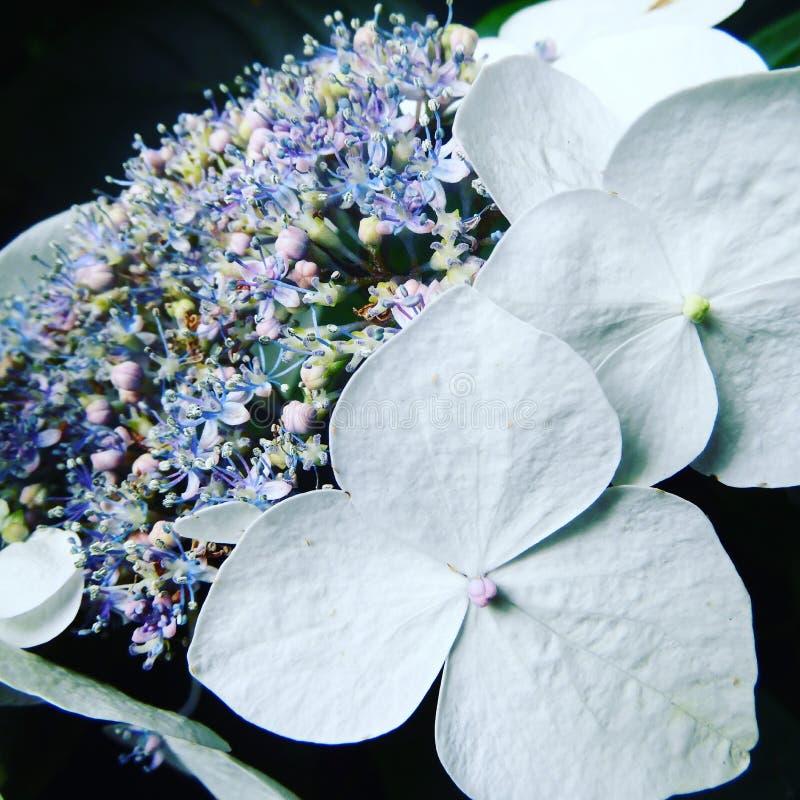 Όμορφα άσπρα λουλούδια με τα χρώματα κρητιδογραφιών στοκ εικόνα με δικαίωμα ελεύθερης χρήσης
