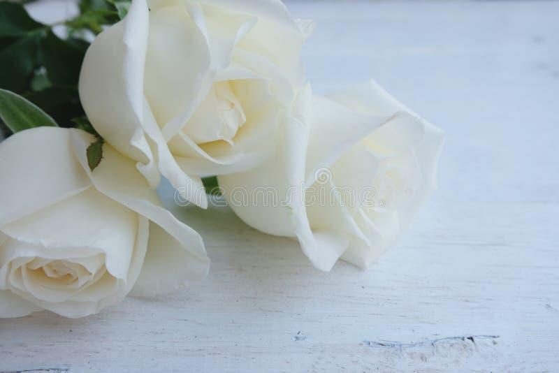 Όμορφα άσπρα τριαντάφυλλα στο λευκό ξύλινο πίνακα Valentine& x27 έννοια υποβάθρου ημέρας του s στοκ φωτογραφίες