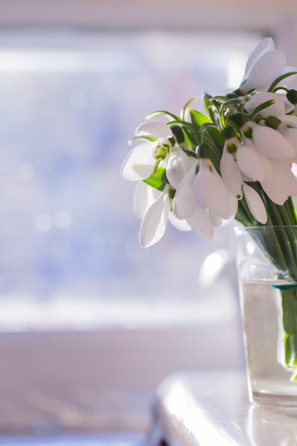 Όμορφα άσπρα snowdrops στο βάζο γυαλιού κοντά στο ηλιόλουστο παράθυρο στοκ φωτογραφία