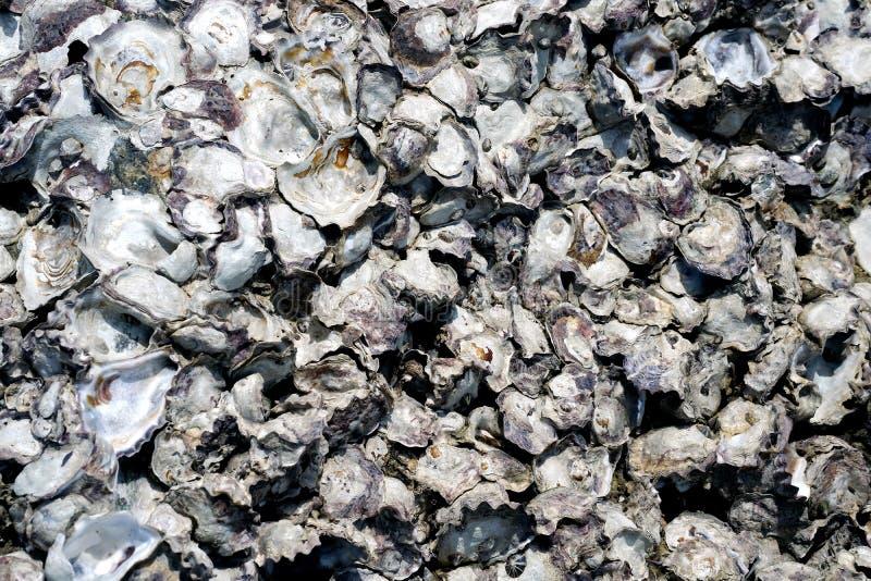 Όμορφα απολιθωμένα κοχύλια στους βράχους στοκ εικόνα με δικαίωμα ελεύθερης χρήσης
