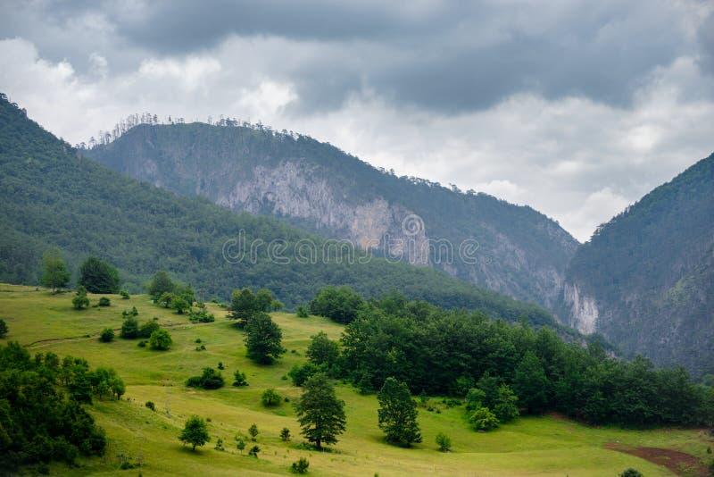Όμορφα βουνά του φαραγγιού της Tara ποταμών Εθνικό πάρκο Durmitor στο Μαυροβούνιο, Βαλκάνια, Ευρώπη στοκ εικόνα με δικαίωμα ελεύθερης χρήσης