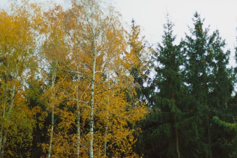 Όμορφα δάσος φθινοπώρου, δέντρα και άδεια, τοπίο στοκ φωτογραφίες με δικαίωμα ελεύθερης χρήσης