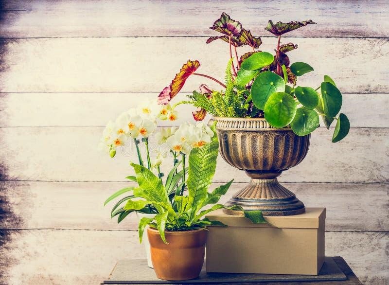 Όμορφα εγκαταστάσεις και λουλούδια ορχιδεών για την εσωτερική κηπουρική εμπορευματοκιβωτίων στοκ εικόνες