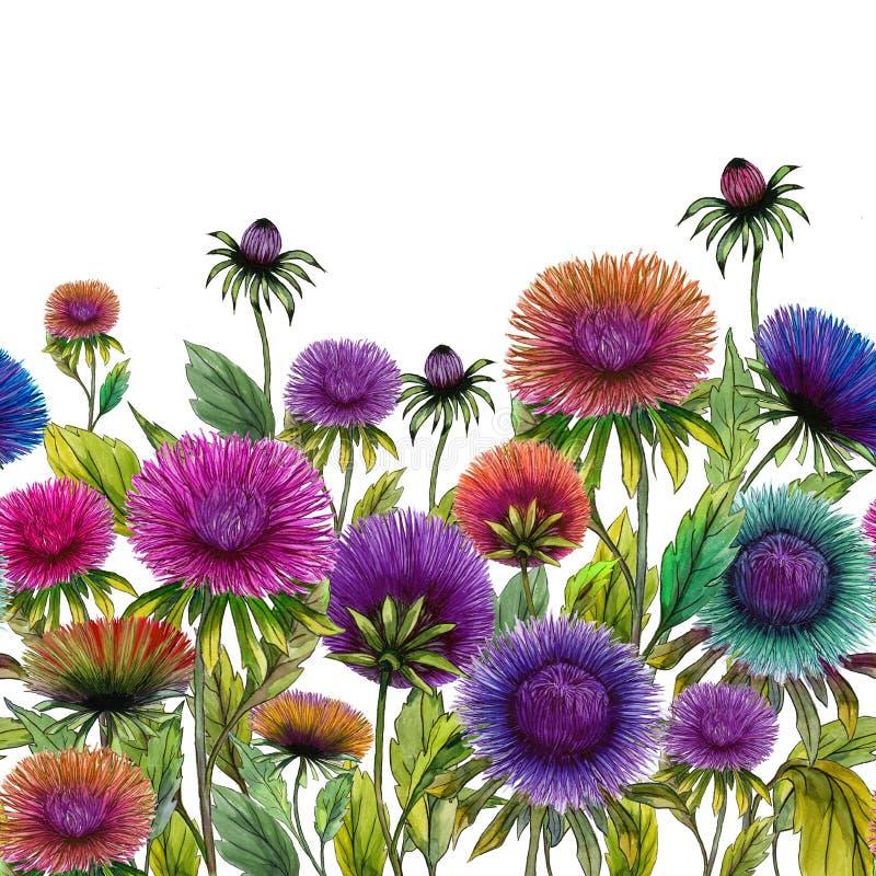 Όμορφα ζωηρόχρωμα λουλούδια αστέρων με τα πράσινα φύλλα στο άσπρο υπόβαθρο floral πρότυπο άνευ ραφής υψηλό watercolor ποιοτικής α ελεύθερη απεικόνιση δικαιώματος
