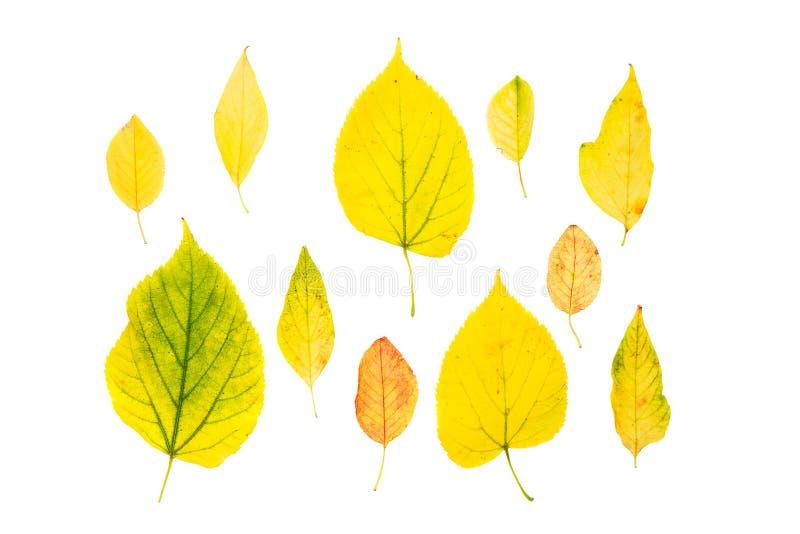 Όμορφα ζωηρόχρωμα φύλλα φθινοπώρου συλλογής που απομονώνονται στο άσπρο υπόβαθρο r στοκ εικόνες