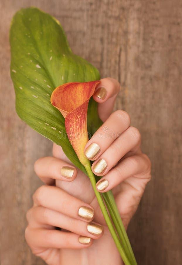 Όμορφα θηλυκά χέρια με το χρυσό calla εκμετάλλευσης σχεδίου καρφιών κρίνο στοκ φωτογραφία με δικαίωμα ελεύθερης χρήσης
