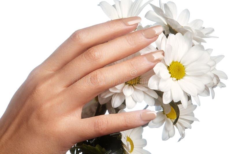 Όμορφα θηλυκά δάχτυλα με το ρόδινο μανικιούρ κρητιδογραφιών σχετικά με τα λουλούδια άνοιξη Προσοχή για τα θηλυκά χέρια, υγιές μαλ στοκ εικόνα
