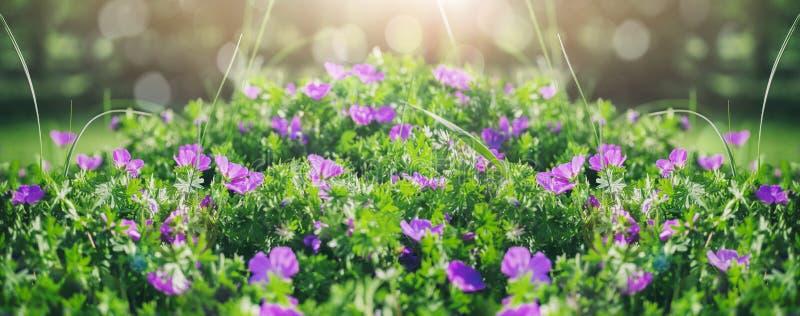 Όμορφα ιώδη λουλούδια κουδουνιών, πράσινα και bokeh φωτισμός στον κήπο, υπόβαθρο θερινής υπαίθριο floral φύσης στοκ φωτογραφία