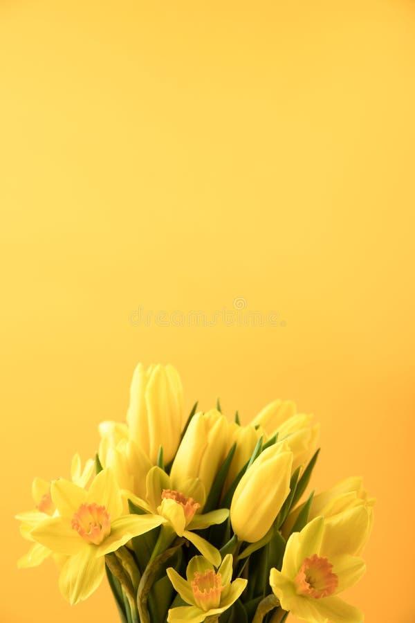 Όμορφα κίτρινα λουλούδια άνοιξη που απομονώνονται σε κίτρινο στοκ εικόνα