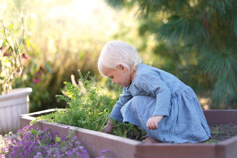 Όμορφα λαχανικά λίγης μικρών παιδιών συγκομιδής κοριτσιών από τον κήπο στοκ φωτογραφία