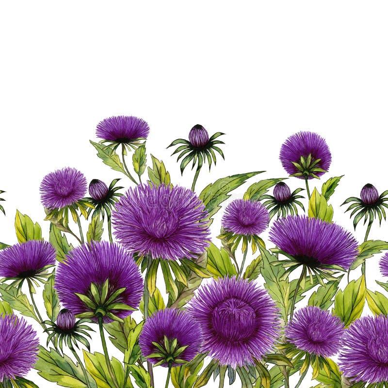 Όμορφα λουλούδια αστέρων με τα πράσινα φύλλα στο άσπρο υπόβαθρο floral πρότυπο άνευ ραφής υψηλό watercolor ποιοτικής ανίχνευσης ζ απεικόνιση αποθεμάτων