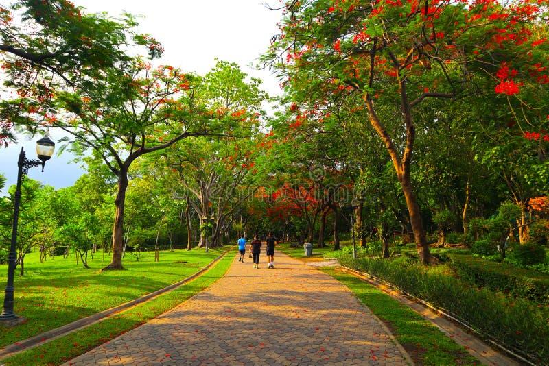 Όμορφα λουλούδια και δάσος δέντρων που εξωραΐζεται στο δημόσιο κήπο το καλοκαίρι στοκ φωτογραφία με δικαίωμα ελεύθερης χρήσης